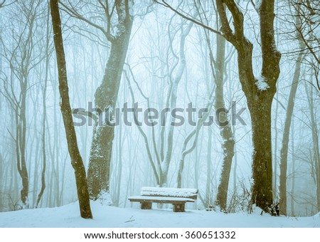 Snowy bench in the forest  Lovely winter scenery with a bench covered by snow, standing alone, far into the forest, between tall trees empty of leaves, waiting to give relaxation to those who need it.
