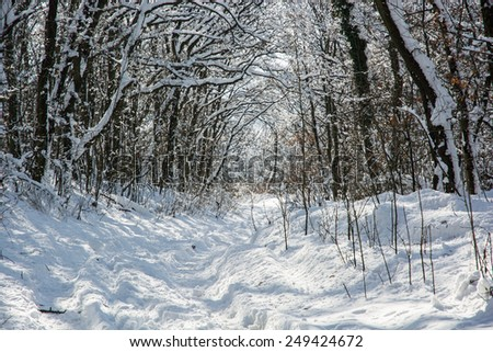 Snowy footpath in winter forest. Natural background.