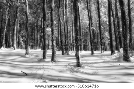 Snowy forest in winter in Tuscany,Italy