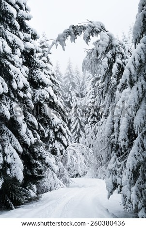 Snowy Forest Road and a Bending Fir Tree   - stock photo
