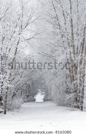 Snowy frost covered tree filled lane in the country - stock photo