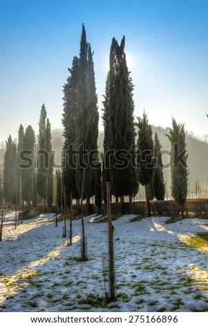 Snowy landscape with cypresses