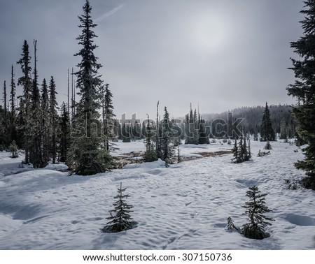 Snowy landscape with different sizes of coniferous trees - stock photo