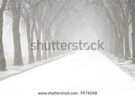 snowy lane - stock photo