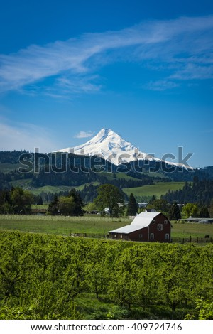 Snowy Mount Hood and apple orchards in the Hood , Oregon River Valley - stock photo