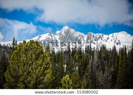 Snowy mountain and pine trees
