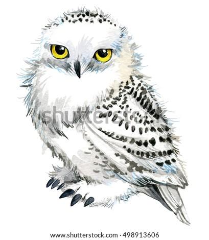 Cute Owl Watercolor Owl Owl Tee Stock Illustration ...