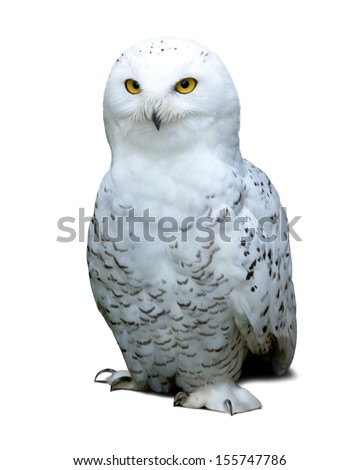 snowy Owl over white background with shade - stock photo