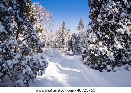 Snowy park in Warsaw - stock photo