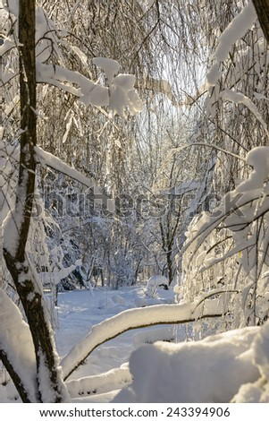 Snowy Park Landscape in Winter