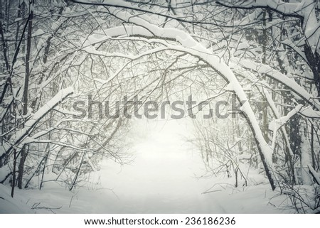 Snowy path through winter forest with overhanging heavy branches bending under snow and forming a tunnel. Ontario, Canada. - stock photo