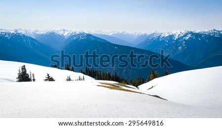 Snowy Pines and Hurricane Ridge at Olympic National Park  - stock photo