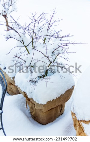 snowy planter in garden, photo icon for winter, winter dormancy and frost protection - stock photo