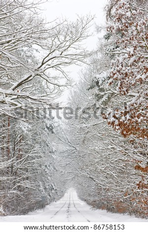 snowy road, Czech Republic - stock photo