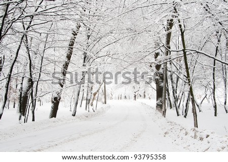 snowy road in forest - stock photo