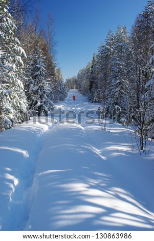 snowy road in the forest - stock photo