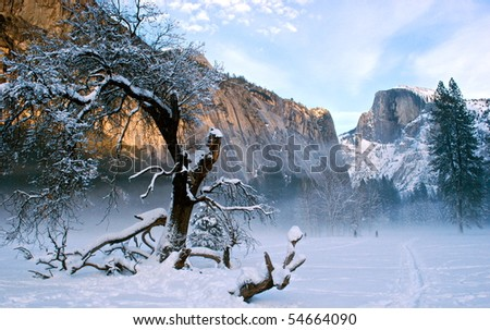 Snowy Tree in Yosemite - stock photo