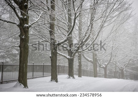 Snowy trees and fence along winter road covered in thick snow. Toronto, Canada. - stock photo