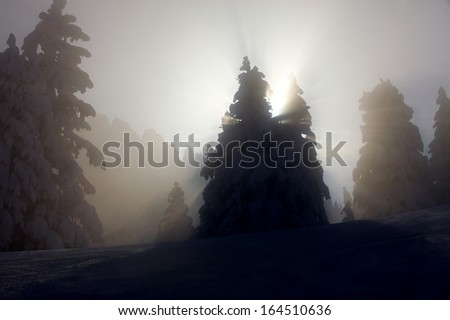 Snowy trees with sunlight filtering through the fog
