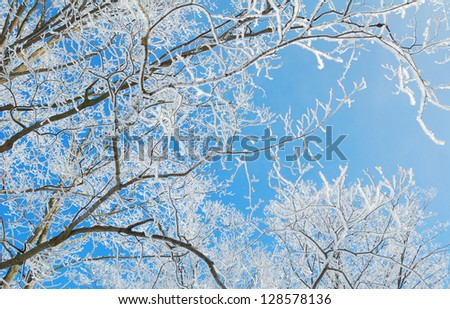 Snowy winter background - stock photo