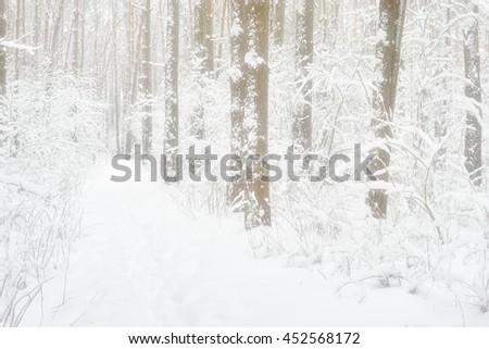 Snowy winter forest in  morning misty haze - stock photo