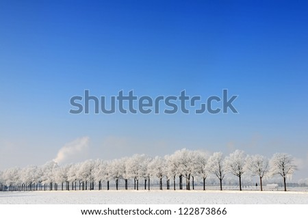Snowy winter landscape with row of trees in Holland - stock photo