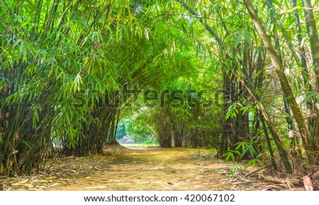 So Beautiful bamboo tree forest path with line up along roadsides create dirt road leading down Into the small road at beautiful horizon in Binh Duong, Vietnam - stock photo