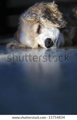 So sleepy - stock photo