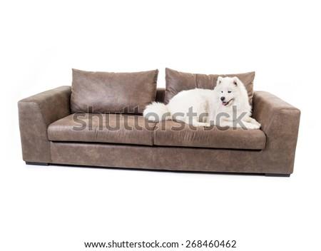 Sofa isolated with white dog - stock photo