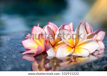 Soft and blurred focus of pink orange  plumeria flower on colorful filter style in swimming pool for background and texture