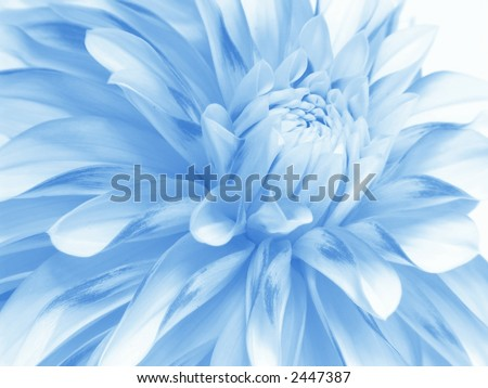 Soft blue flower close-up - stock photo