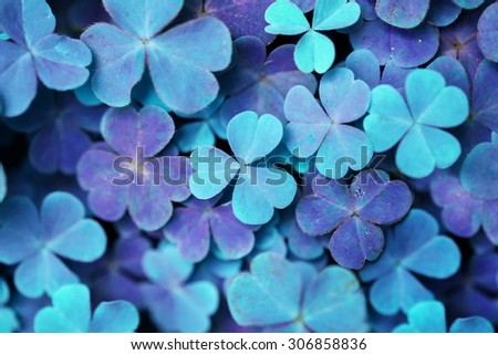 soft blur Lucky clovers with rainbow, Saint Patrick's Day background , soft blur blur background with infrared. - stock photo