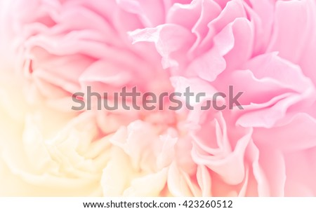 Soft blurred of rose flower background, made with filters pastel color and blur style for background. - stock photo