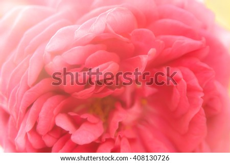 Soft blurred of roses flowers in pastel tone for background. - stock photo