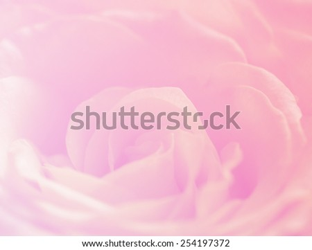 Soft color nature single flowers rose background