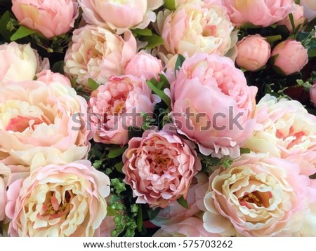Soft color Roses Background
