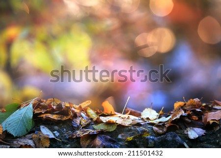soft colored and focused colorful autumn background with many leafs in foreground and space for text in background  - stock photo