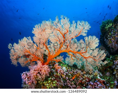 Soft Coral - stock photo