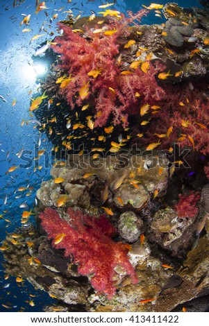 Soft coral, hard coral reef. Fish, underwater scenery.