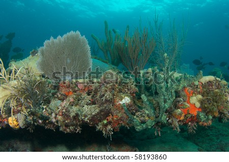 Soft Coral Reef Composition, including Sea Rods, Sea Fans and Sea Whips, picture taken in Broward County, Florida - stock photo