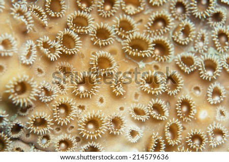 Soft coral texture - stock photo