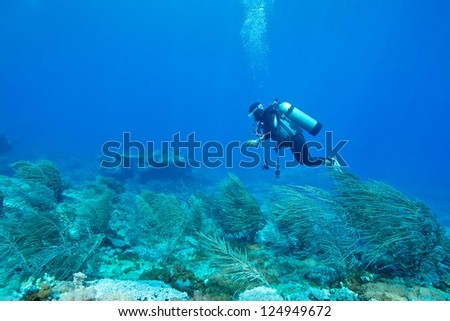 Soft coral with diver background, Green island, Taiwan