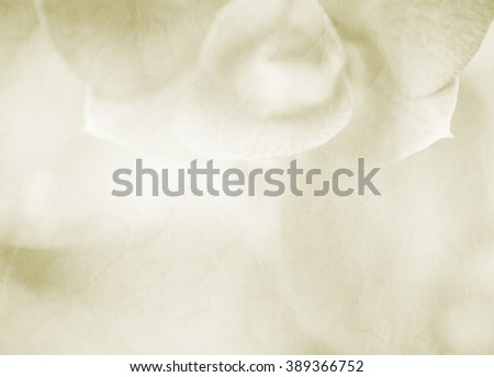 Soft flower background made with color filters , unfocused - stock photo