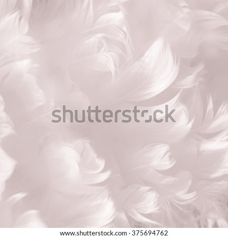 Soft fluffy white goose feather texture background - shallow depth of field - stock photo