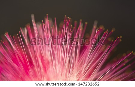 Soft-focus beautiful Red flower  - stock photo