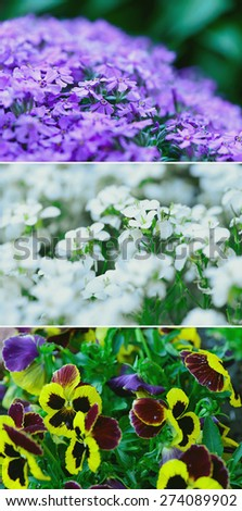 Soft focus close up of spring flowers - stock photo