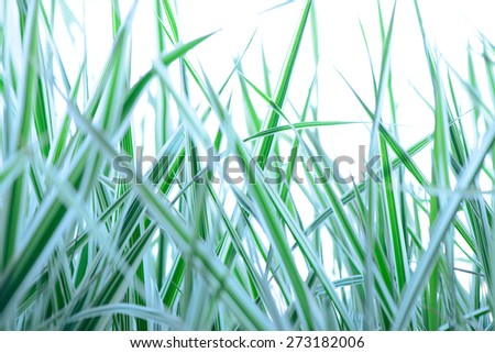 Soft focus close up of spring green grass isolated - stock photo