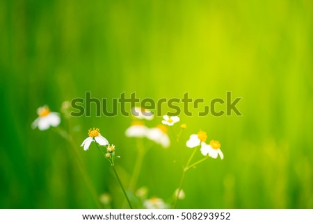 Soft focus flower with opened space for your design