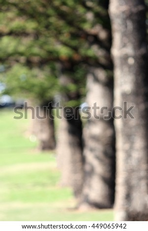 Soft Focus line of Norfolk Pines - stock photo