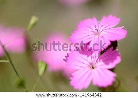 Soft focus macro of wildflowers
